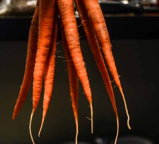 hanging carrots